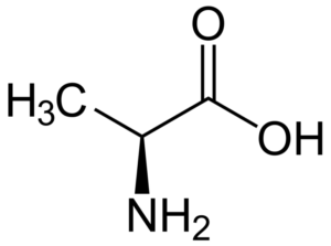 Заменимые аминокислоты для организма