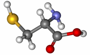 Роль аминокислот